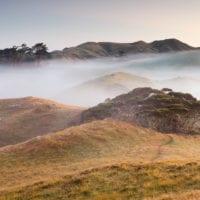 Schafweide vor Sonnenaufgang, Tasman, Südinsel