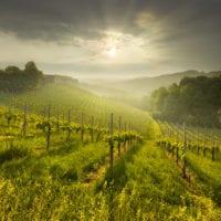 Südsteirische Weinstrasse - Landschaftsfotografie