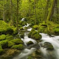Wald Fotos - Fine Art Print - Landschaftsfotograf