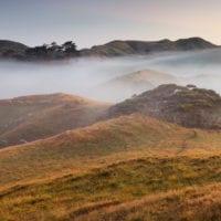 Morgenstimmung, Schafweide, Wharariki, Tasman, Südinsel, Neuseeland