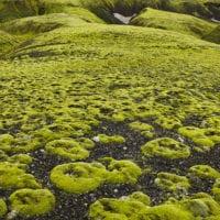 Moospolster, Fjallabak, Südisland, Island